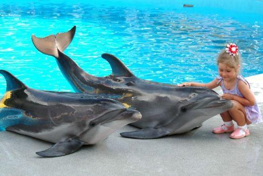 Дельфинарий в Кемере фото