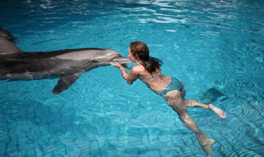 кемер дельфинарий