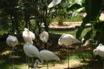 анталийский зоопарк