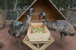 анталия зоопарк