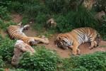 зоопарк анталия