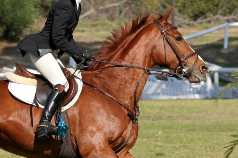 конный клуб Orfe